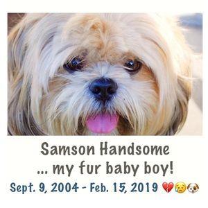 Samson Handsome is in Heaven 🐶💔 I'm Heartbroken